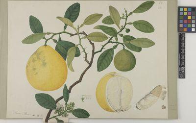 Citrus - Cover II