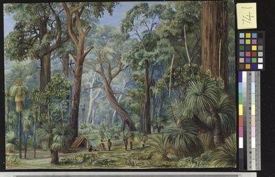 Scene in a West Australian Forest