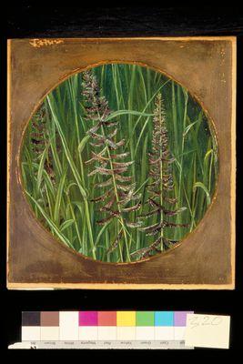 A sacred Grass
