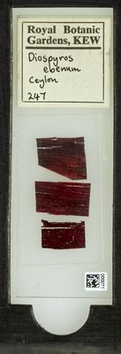 A specimen from Kew's microscope slide collection - whole slide. Image ref: KMIC000071_2015.12.18__preview