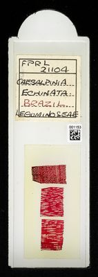 A specimen from Kew's microscope slide collection - whole slide. Image ref: KMIC001153_2018.07.19_preview