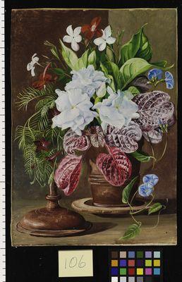 106. Brazilian Flowers.