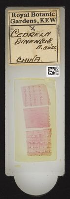 A specimen from Kew's microscope slide collection - whole slide. Image ref: KMIC000525_2016.08.12_preview