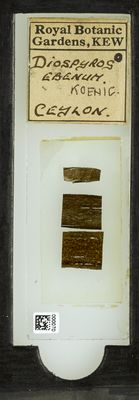 A specimen from Kew's microscope slide collection - whole slide. Image ref: KMIC000070_2015.12.18__preview