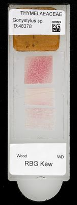 A specimen from Kew's microscope slide collection - whole slide. Image ref: KMIC000629_2016.08.26_preview