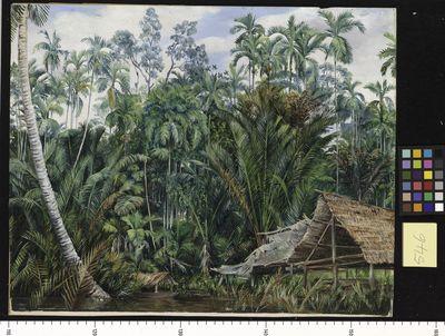 Old Boat-house and Riverside Vegetation, Sarawak (Borneo)
