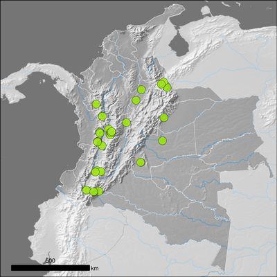 Pouteria lucuma (Ruiz & Pav.) Kuntze