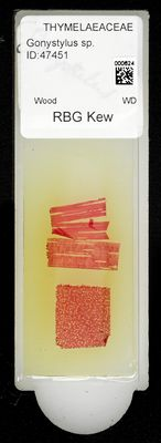 A specimen from Kew's microscope slide collection - whole slide. Image ref: KMIC000624_2016.08.26_preview
