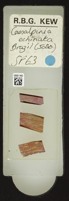 A specimen from Kew's microscope slide collection - whole slide. Image ref: KMIC000140_2016.05.04_preview