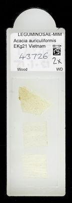 A specimen from Kew's microscope slide collection - whole slide. Image ref: KMIC001104_2018.04.13_preview