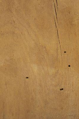 Prumnopitys montana wood