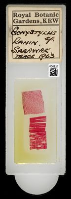 A specimen from Kew's microscope slide collection - whole slide. Image ref: KMIC000627_2016.08.26_preview