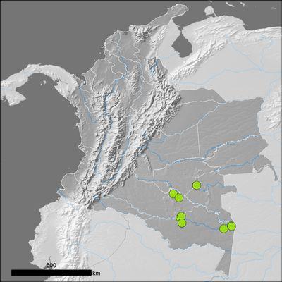 Pterozonium reniforme (Mart.) Fée