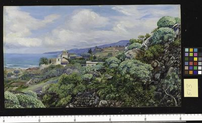 View of Sitio del Pardo, Orotava, Teneriffe