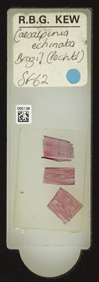 A specimen from Kew's microscope slide collection - whole slide. Image ref: KMIC000139_2016.05.04_preview