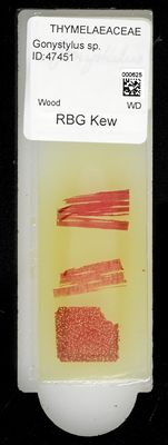 A specimen from Kew's microscope slide collection - whole slide. Image ref: KMIC000625_2016.08.26_preview