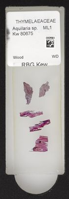 A specimen from Kew's microscope slide collection - whole slide. Image ref: KMIC000593_2016.08.12_preview