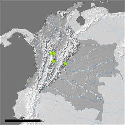 Garcinia mangostana L.