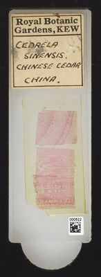 A specimen from Kew's microscope slide collection - whole slide. Image ref: KMIC000522_2016.08.12_preview