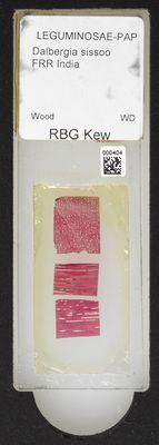 A specimen from Kew's microscope slide collection - whole slide. Image ref: KMIC000404_2016.06.21_preview