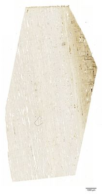 A specimen from Kew's microscope slide collection - radial longitudinal section of wood. Image ref: KMIC000631_2016.09.13-S4