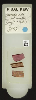 A specimen from Kew's microscope slide collection - whole slide. Image ref: KMIC000141_2016.05.04_preview