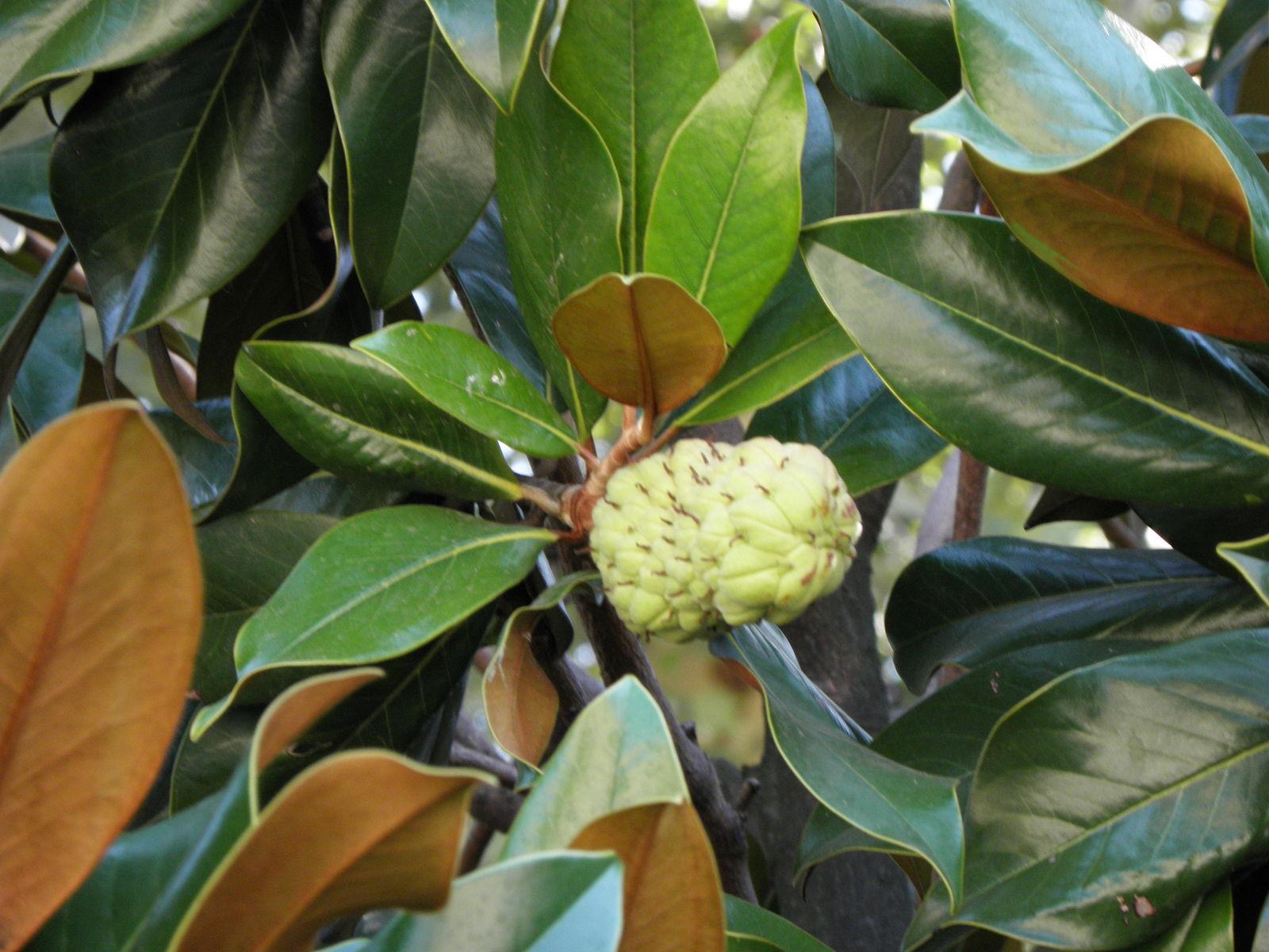 ark plant species y