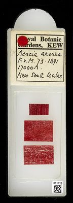 A specimen from Kew's microscope slide collection - whole slide. Image ref: KMIC001126_2018.04.13_preview