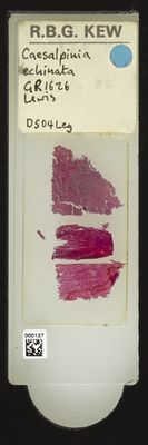 A specimen from Kew's microscope slide collection - whole slide. Image ref: KMIC000137_2016.05.04_preview
