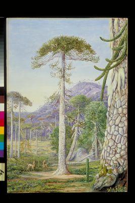004. Puzzle - Monkey Trees and Guanacos, Chili