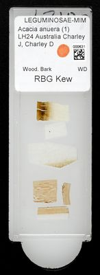 A specimen from Kew's microscope slide collection - whole slide. Image ref: KMIC000631_2016.09.12_preview