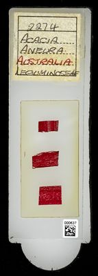 A specimen from Kew's microscope slide collection - whole slide. Image ref: KMIC000637_2016.09.12_preview