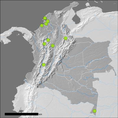 Pouteria sapota (Jacq.) H.E.Moore & Stearn