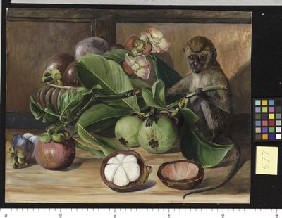 Flowers and Fruit of the Mangosteen, and Singapore Monkey
