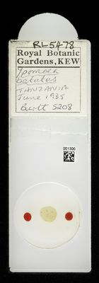 A specimen from Kew's microscope slide collection - whole slide. Image ref: KMIC001300_2019.02.27_preview