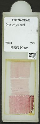 A specimen from Kew's microscope slide collection - whole slide. Image ref: KMIC000078_2015.12.18__preview