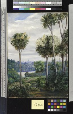 View of Melbourne, from the Botanic Gardens