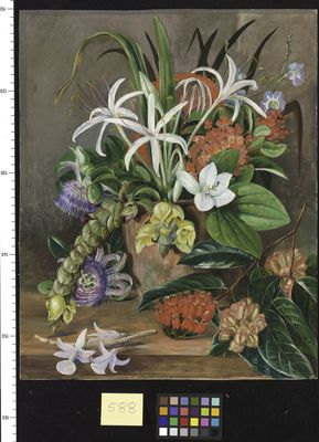 Group of Cultivated Flowers