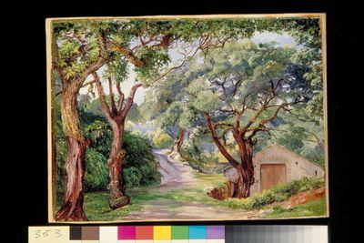 Cork Trees at Cintra, near Lisbon