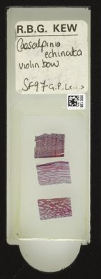 A specimen from Kew's microscope slide collection - whole slide. Image ref: KMIC000136_2016.05.04_preview