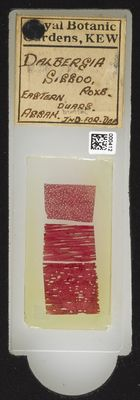 A specimen from Kew's microscope slide collection - whole slide. Image ref: KMIC000412_2016.06.21_preview