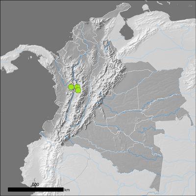 Pueraria montana (Lour.) Merr.