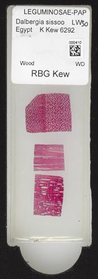 A specimen from Kew's microscope slide collection - whole slide. Image ref: KMIC000410_2016.06.21_preview