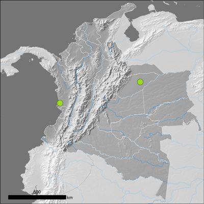 Acmella paniculata (Wall. ex DC.) R.K.Jansen