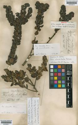 A specimen from Kew's Herbarium