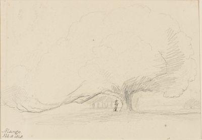 Mango. Feb. 8. 1848.