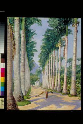 Side Avenue of Royal Palms at Botafoga, Brazil