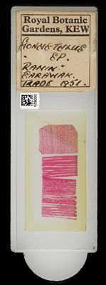 A specimen from Kew's microscope slide collection - whole slide. Image ref: KMIC000626_2016.08.26_preview