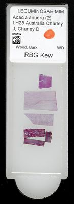 A specimen from Kew's microscope slide collection - whole slide. Image ref: KMIC000634_2016.09.12_preview