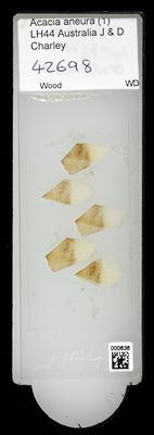 A specimen from Kew's microscope slide collection - whole slide. Image ref: KMIC000636_2016.09.12_preview